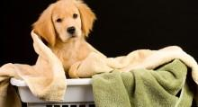 Dog Care Checklist
