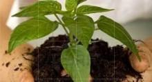 Gardening Checklist
