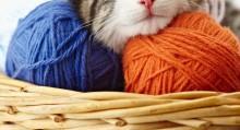 Cat Supply Checklist