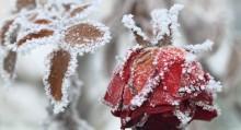 Winter Gardening Checklist