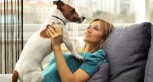 Dog Groomer Checklist