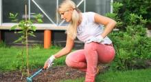 Garden Pest Prevention Checklist